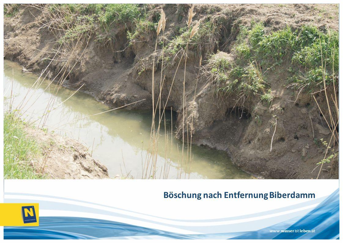 www.wasser ist leben.at Böschung nach Entfernung Biberdamm