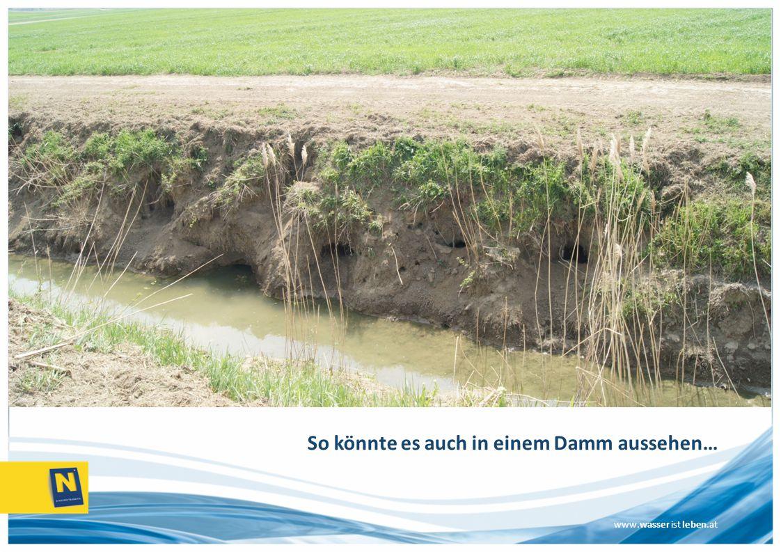 www.wasser ist leben.at So könnte es auch in einem Damm aussehen…