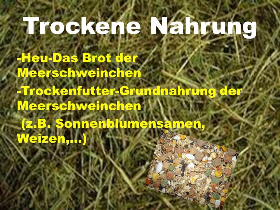 Frischfutter Gurke Karotte Salat Löwenzahn Gras (Ungedüngt!) Melone Usw.