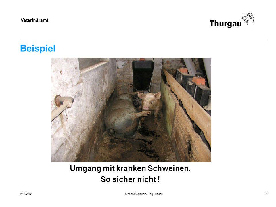 Veterinäramt Beispiel Strickhof Schweine-Tag, Lindau20 Umgang mit kranken Schweinen. So sicher nicht ! 16.1.2015