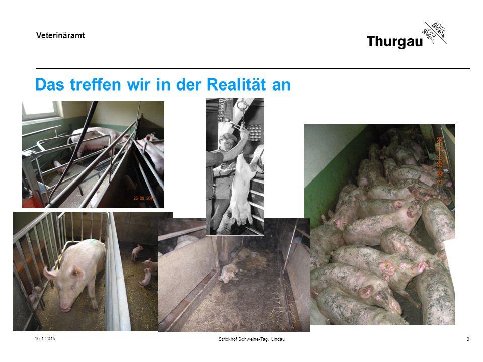 Veterinäramt Rechte und Pflichten des Fleischkontrolleurs Folgerungen Fleischkontrolleur ist massgebend für die Verwendung des Schlachtkörpers Fleischkontrolleur braucht Informationen, um Schlachtkörper abschliessend beurteilen zu können Fleischkontrolleur hat Informationspflicht, sowohl betreffend Beanstandungen Fleisch als auch Einhaltung Tierschutzvorschriften Strickhof Schweine-Tag, Lindau14 16.1.2015
