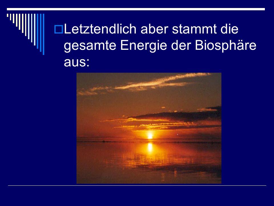  Letztendlich aber stammt die gesamte Energie der Biosphäre aus: