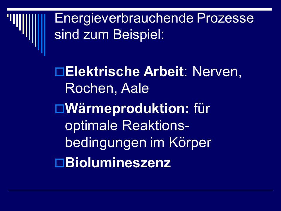  Elektrische Arbeit: Nerven, Rochen, Aale  Wärmeproduktion: für optimale Reaktions- bedingungen im Körper  Biolumineszenz Energieverbrauchende Proz