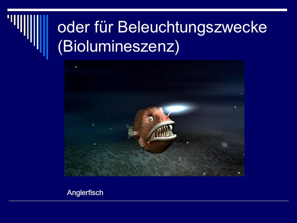 oder für Beleuchtungszwecke (Biolumineszenz) Anglerfisch