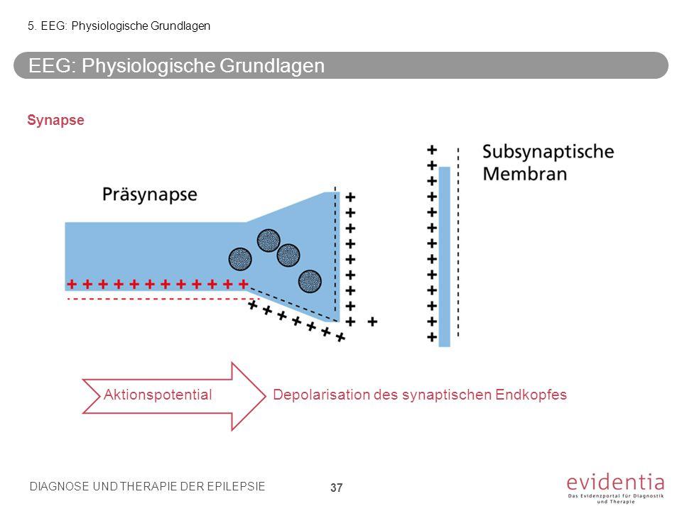 Synapse Aktionspotential Depolarisation des synaptischen Endkopfes EEG: Physiologische Grundlagen 5. EEG: Physiologische Grundlagen DIAGNOSE UND THERA