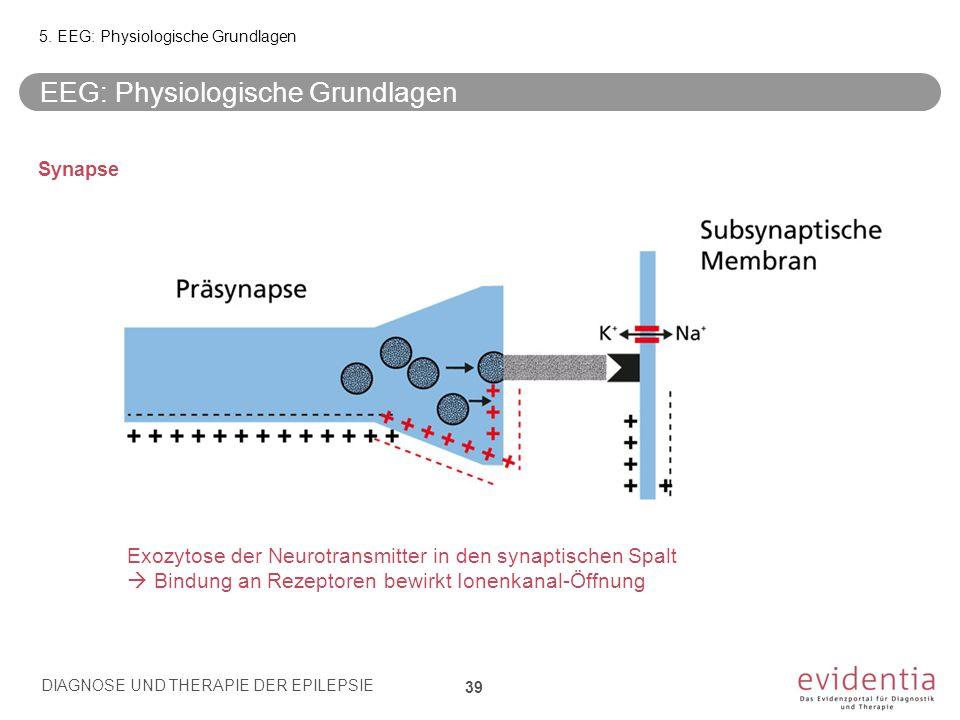Synapse Exozytose der Neurotransmitter in den synaptischen Spalt  Bindung an Rezeptoren bewirkt Ionenkanal-Öffnung EEG: Physiologische Grundlagen 5.