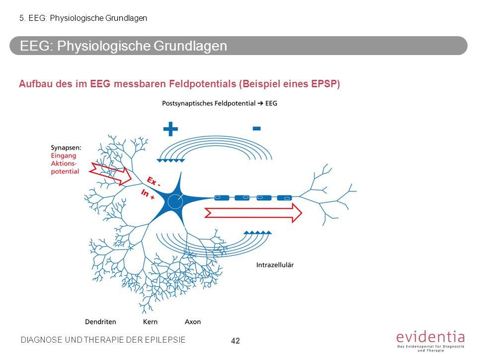 Aufbau des im EEG messbaren Feldpotentials (Beispiel eines EPSP) EEG: Physiologische Grundlagen 5. EEG: Physiologische Grundlagen DIAGNOSE UND THERAPI