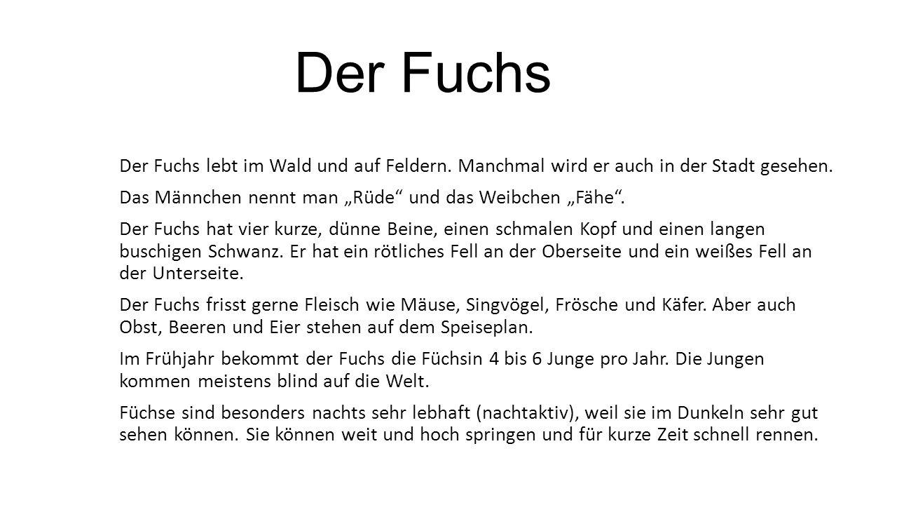 """Der Fuchs Der Fuchs lebt im Wald und auf Feldern. Manchmal wird er auch in der Stadt gesehen. Das Männchen nennt man """"Rüde"""" und das Weibchen """"Fähe"""". D"""