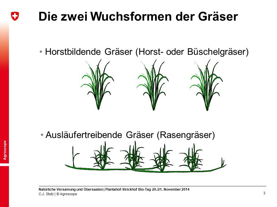 4 Horst- oder Büschelgräser Vermehrung hauptsächlich über Versamung Ein Horst hat eine begrenzte Lebensdauer (ca.