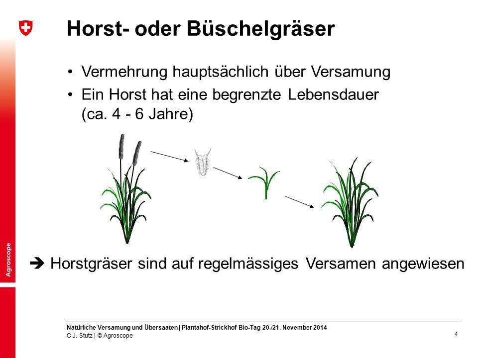5 Horstgräser z.B.Knaulgras oder Italienisches Raigras C.J.