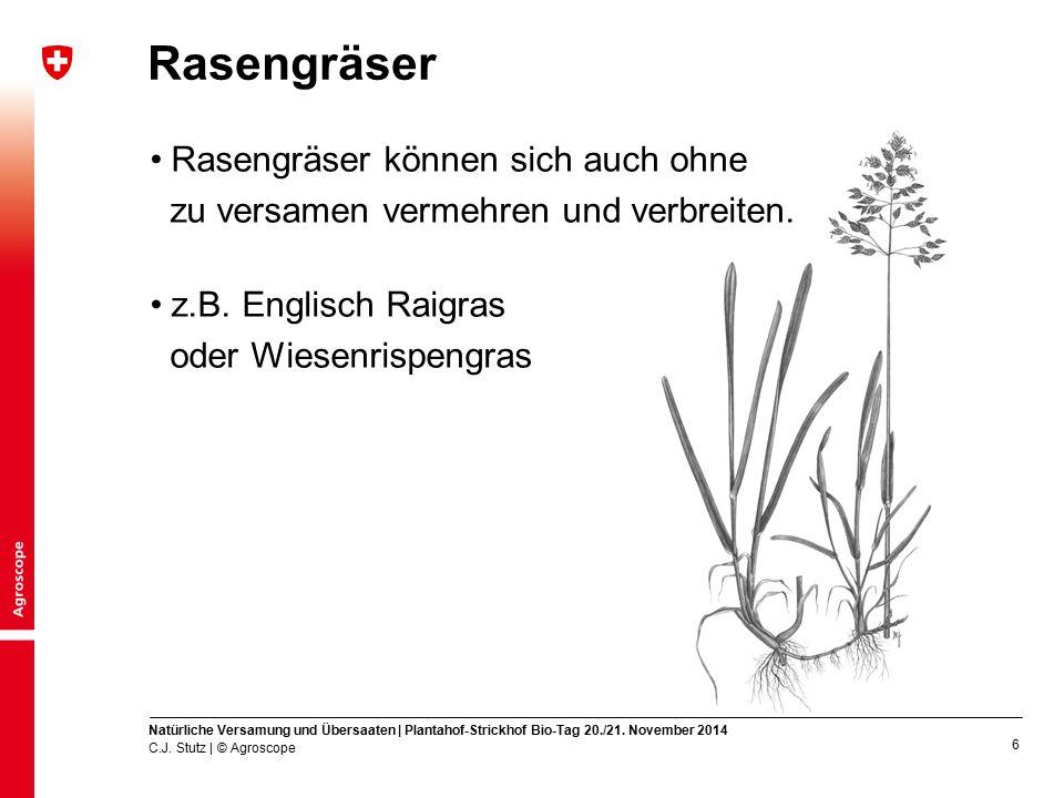 7 Wenn die Futtergräser sich nicht regenerieren können Beispiel einer Italienisch-Raigras-Wiese Jahresertrag (dt TS / ha) 115 129 Bassetti et al., 1991 Nach 5 Jahren 7 4 Ertragsanteil (%) C.J.