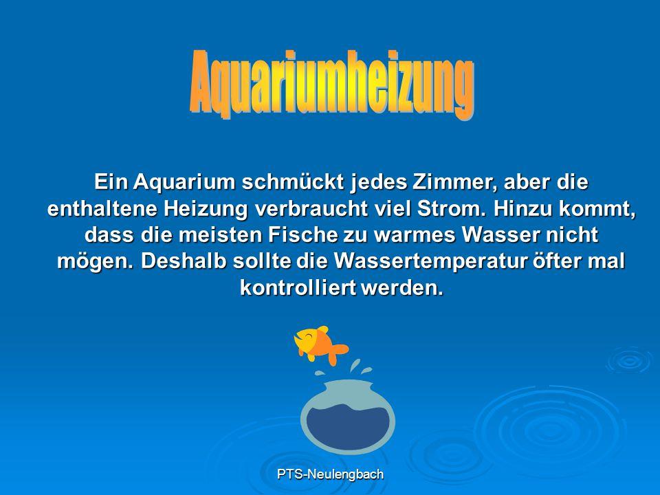 PTS-Neulengbach Ein Aquarium schmückt jedes Zimmer, aber die enthaltene Heizung verbraucht viel Strom. Hinzu kommt, dass die meisten Fische zu warmes