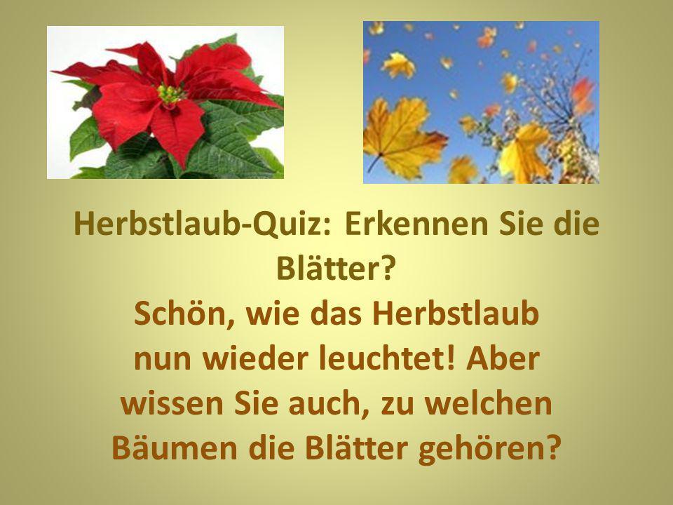 Frage 1: Die Blätter dieser Baumfamilie sind leicht zu erkennen.