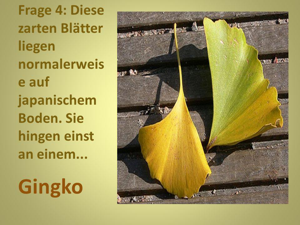 Frage 5: Schon ein bisschen schrumpelig sind diese Blätter. Sie hängen an einer... Birke