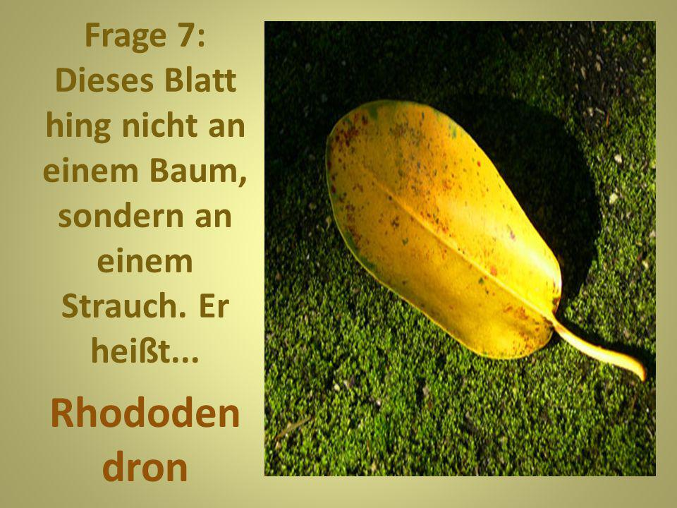 Frage 8: Der Baum hat nicht nur hübsche Blätter, auch seine Früchte sind im Herbst bei Spaziergängern sehr beliebt.