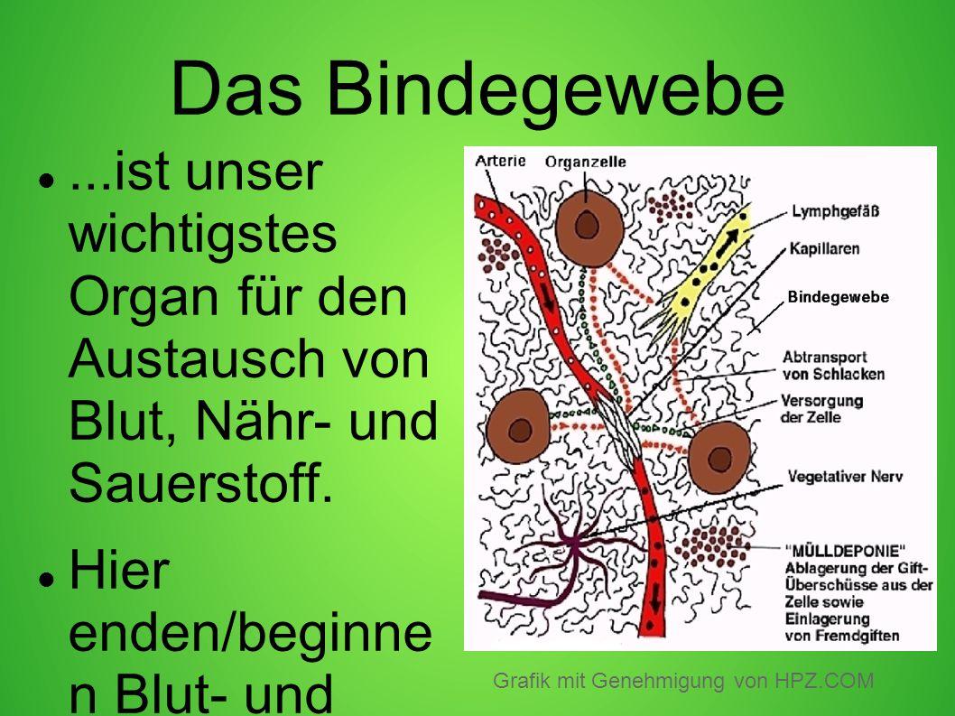 Das Bindegewebe...ist unser wichtigstes Organ für den Austausch von Blut, Nähr- und Sauerstoff. Hier enden/beginne n Blut- und Lymphgefässe und die ve