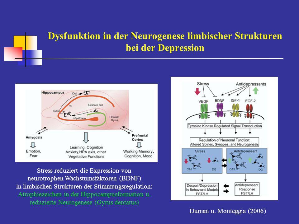 Dysfunktion in der Neurogenese limbischer Strukturen bei der Depression Stress reduziert die Expression von neurotrophen Wachstumsfaktoren (BDNF) in l