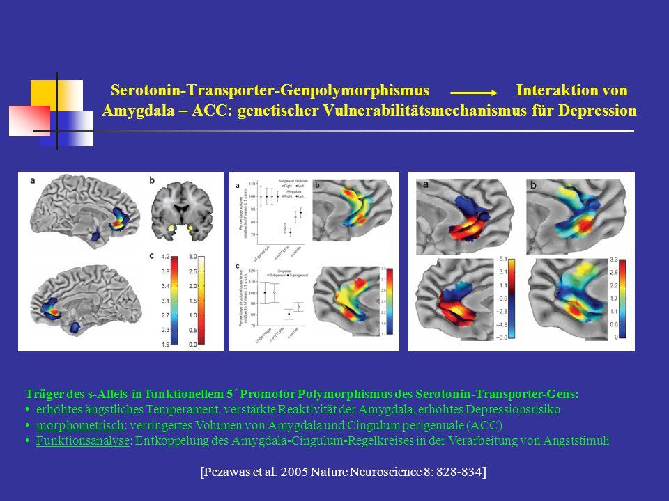 Serotonin-Transporter-Genpolymorphismus Interaktion von Amygdala – ACC: genetischer Vulnerabilitätsmechanismus für Depression Träger des s-Allels in f