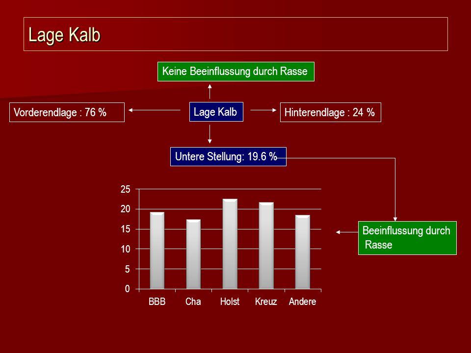 Lage Kalb Hinterendlage : 24 %Vorderendlage : 76 % Keine Beeinflussung durch Rasse Untere Stellung: 19.6 % Beeinflussung durch Rasse