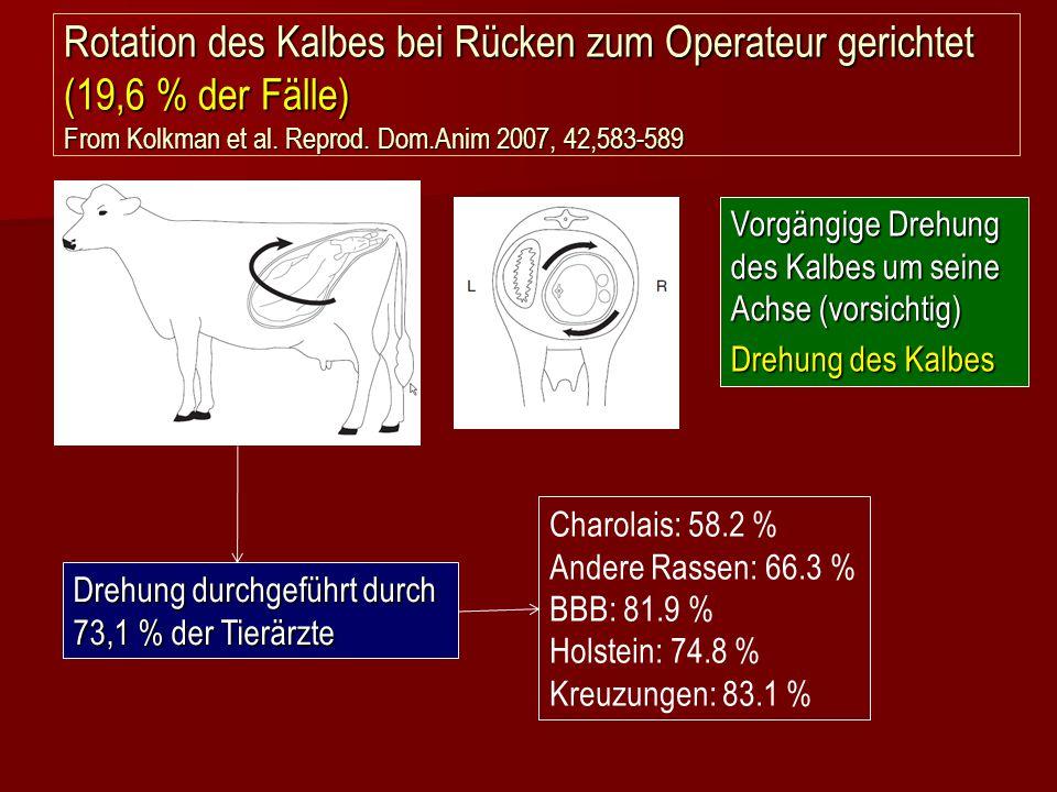 Rotation des Kalbes bei Rücken zum Operateur gerichtet (19,6 % der Fälle) From Kolkman et al. Reprod. Dom.Anim 2007, 42,583-589 Drehung durchgeführt d