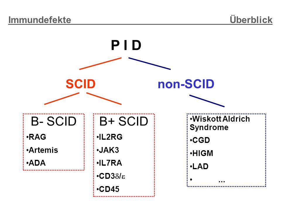 P I D SCID B- SCID RAG Artemis ADA non-SCID Wiskott Aldrich Syndrome CGD HIGM LAD...