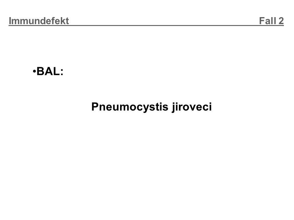BAL: Pneumocystis jiroveci Immundefekt Fall 2