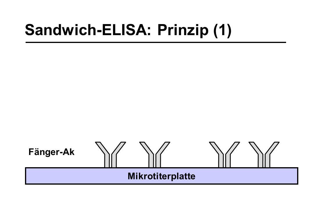 Sandwich-ELISA: Prinzip (1) Fänger-Ak Mikrotiterplatte