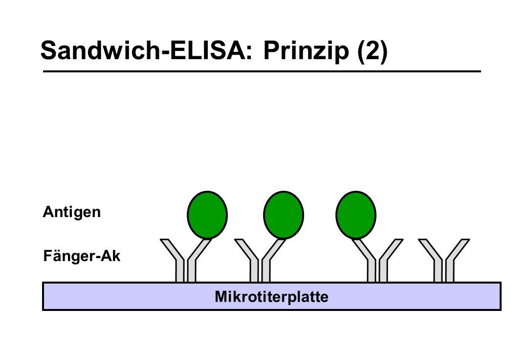 Sandwich-ELISA: Prinzip (2) Fänger-Ak Mikrotiterplatte Antigen