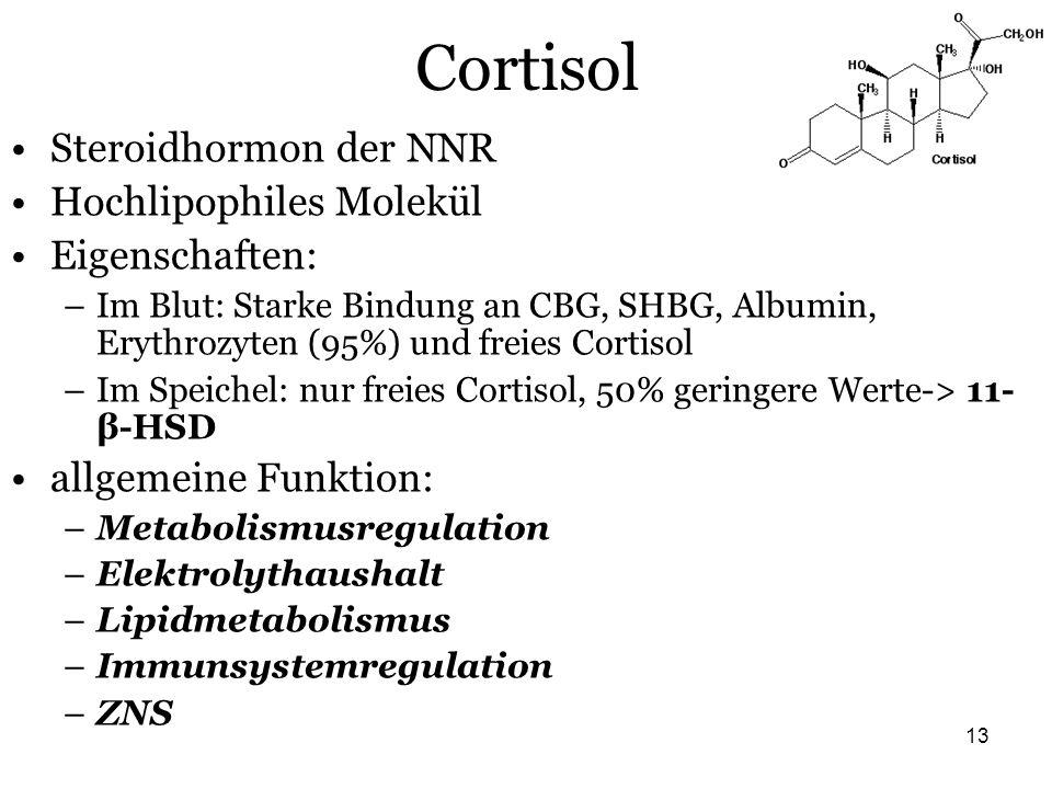 13 Cortisol Steroidhormon der NNR Hochlipophiles Molekül Eigenschaften: –Im Blut: Starke Bindung an CBG, SHBG, Albumin, Erythrozyten (95%) und freies