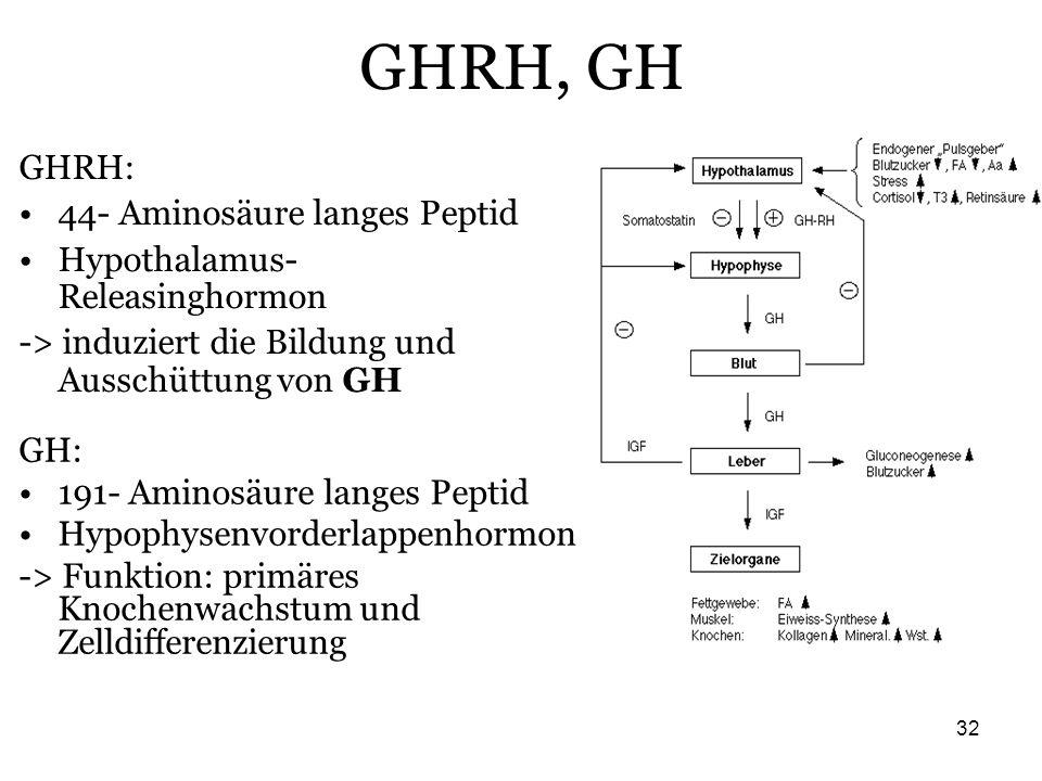 32 GHRH, GH GH: 191- Aminosäure langes Peptid Hypophysenvorderlappenhormon -> Funktion: primäres Knochenwachstum und Zelldifferenzierung GHRH: 44- Ami