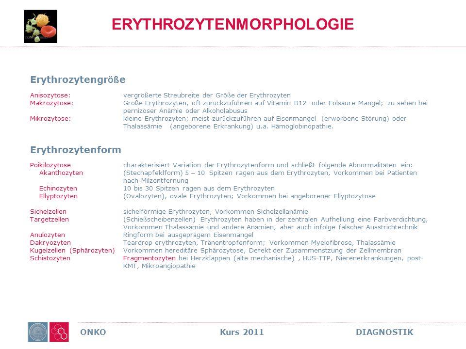 ONKO Kurs 2011 DIAGNOSTIK ERYTHROZYTENMORPHOLOGIE Erythrozytengr öß e Anisozytose: vergr öß erte Streubreite der Gr öß e der Erythrozyten Makrozytose: