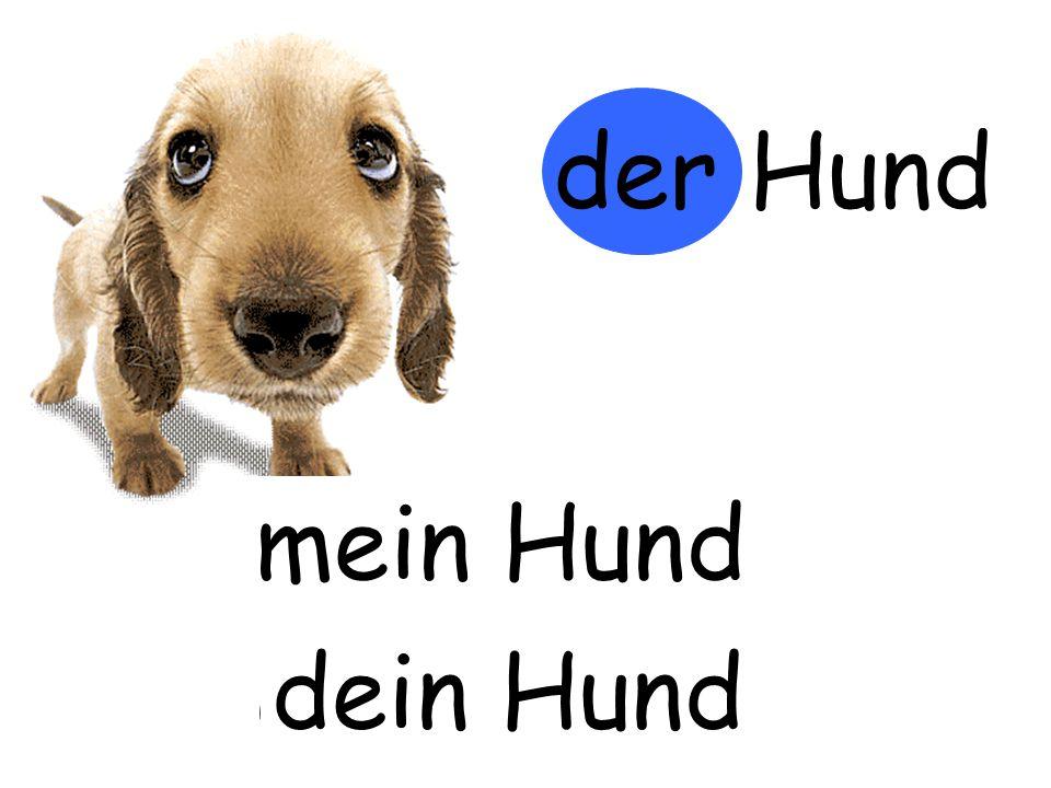 der Hund m…… Hund mein Hund d…… Hund dein Hund