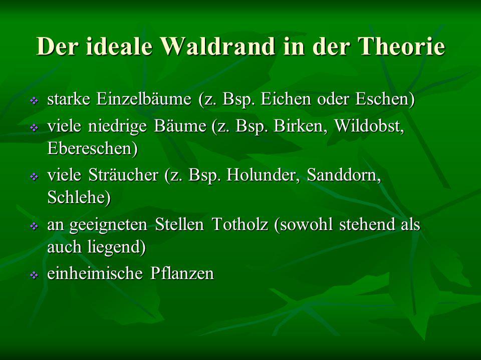 Der ideale Waldrand in der Theorie  starke Einzelbäume (z. Bsp. Eichen oder Eschen)  viele niedrige Bäume (z. Bsp. Birken, Wildobst, Ebereschen)  v