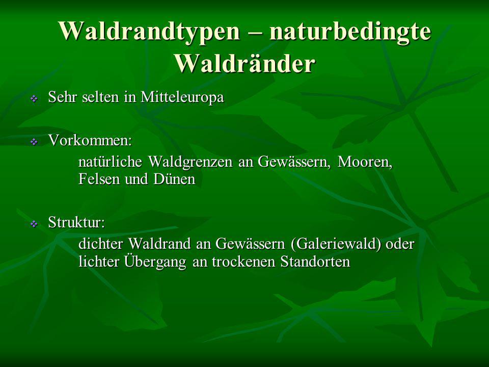 Waldrandtypen – naturbedingte Waldränder  Sehr selten in Mitteleuropa  Vorkommen: natürliche Waldgrenzen an Gewässern, Mooren, Felsen und Dünen  St