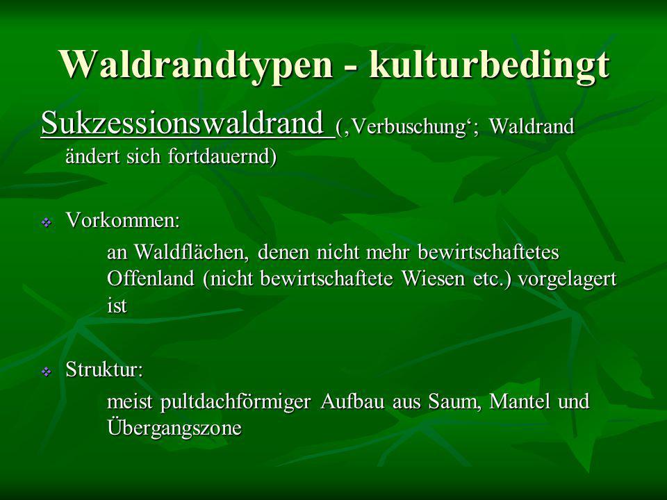 Waldrandtypen - kulturbedingt Sukzessionswaldrand ('Verbuschung'; Waldrand ändert sich fortdauernd)  Vorkommen: an Waldflächen, denen nicht mehr bewi