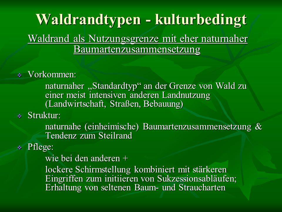 """Waldrandtypen - kulturbedingt Waldrand als Nutzungsgrenze mit eher naturnaher Baumartenzusammensetzung  Vorkommen: naturnaher """"Standardtyp"""" an der Gr"""