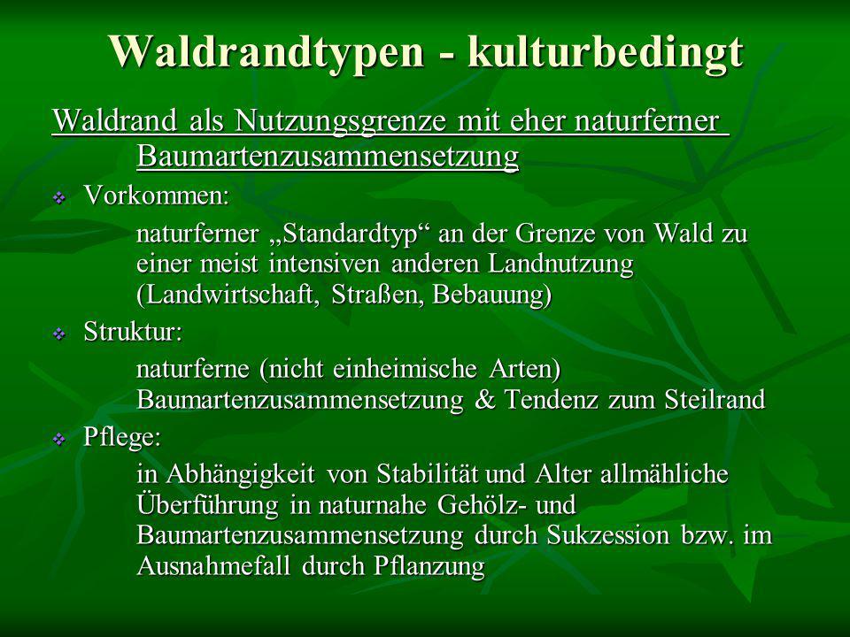 """Waldrandtypen - kulturbedingt Waldrand als Nutzungsgrenze mit eher naturferner Baumartenzusammensetzung  Vorkommen: naturferner """"Standardtyp"""" an der"""