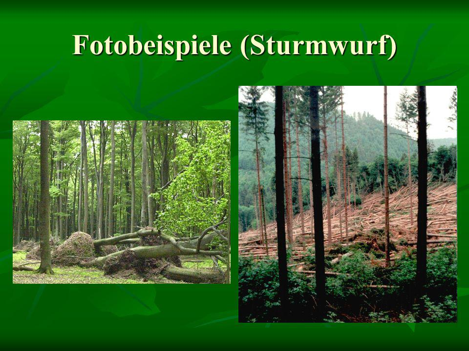 Fotobeispiele (Sturmwurf)