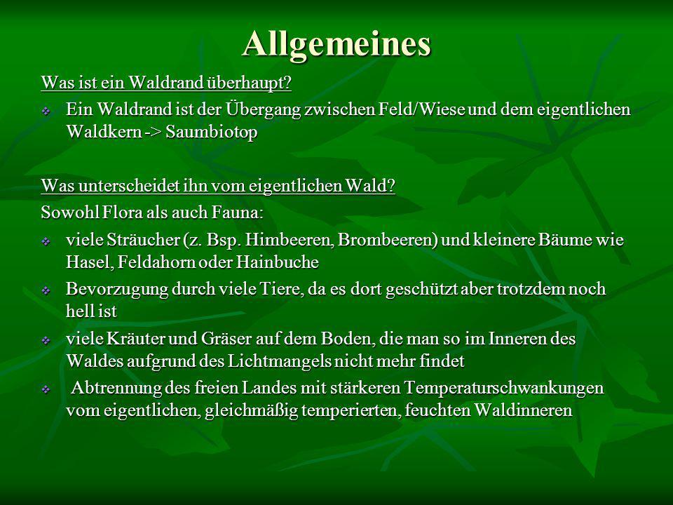 Aufbau Ein 'gesunder', naturnaher Waldrand ist stufig aufgebaut äußere Zone (Kräutersaum / Waldmantel / Strauchzone)  lockerer Bewuchs niedrig bleibender Sträucher => genug Licht zwischen ihnen für Kräuter und Gräser -> ca.