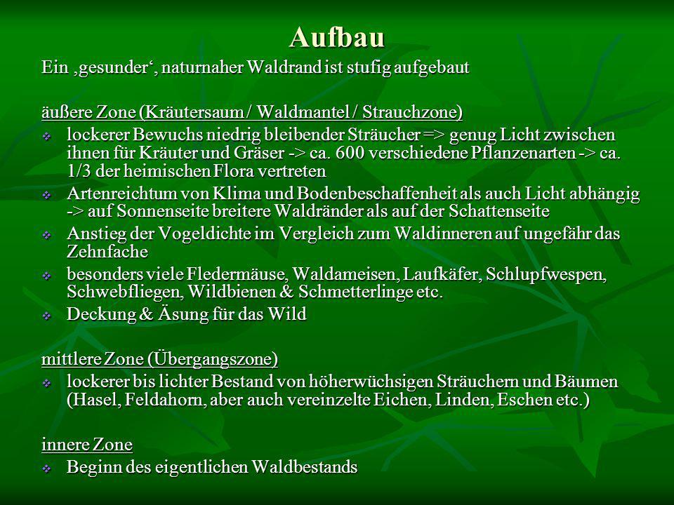 Quellen Waldbau auf ökologischer Grundlage – Ernst Röhrig, Norbert Bartsch, Burghard von Lüpke; Stuttgart; Ulmer-Verlag; 2006 (S.