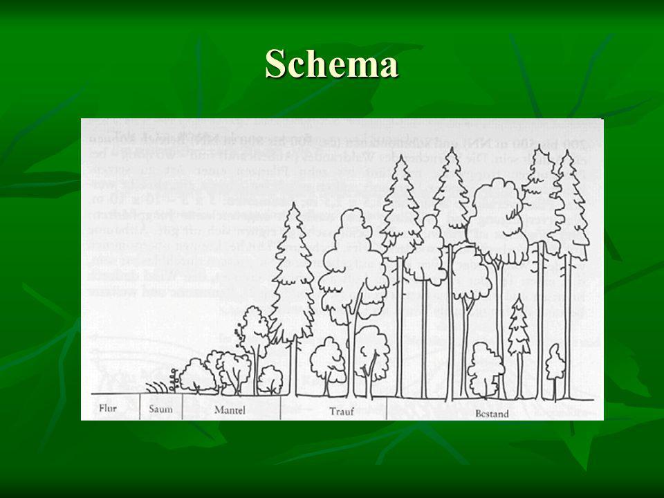 """Waldrandtypen - kulturbedingt Waldrand als Nutzungsgrenze mit eher naturferner Baumartenzusammensetzung  Vorkommen: naturferner """"Standardtyp an der Grenze von Wald zu einer meist intensiven anderen Landnutzung (Landwirtschaft, Straßen, Bebauung)  Struktur: naturferne (nicht einheimische Arten) Baumartenzusammensetzung & Tendenz zum Steilrand  Pflege: in Abhängigkeit von Stabilität und Alter allmähliche Überführung in naturnahe Gehölz- und Baumartenzusammensetzung durch Sukzession bzw."""