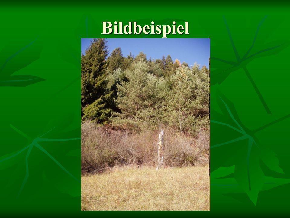 Bildbeispiele (Vögel) Baumpieper Heckenbraunelle
