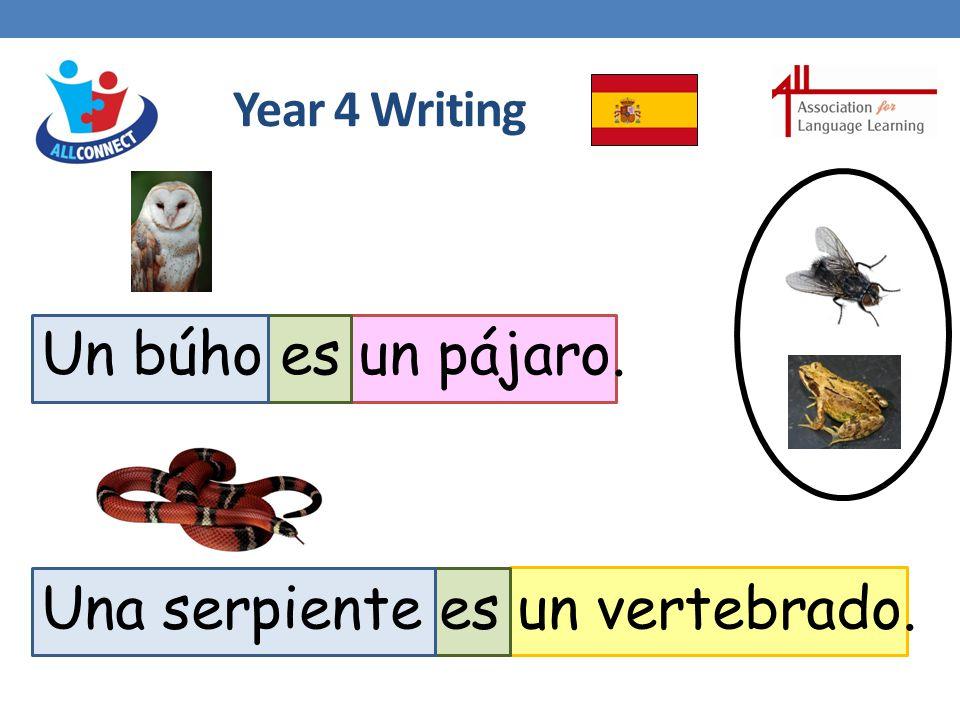 Year 4 Writing Un búho es un pájaro. Una serpiente es un vertebrado.