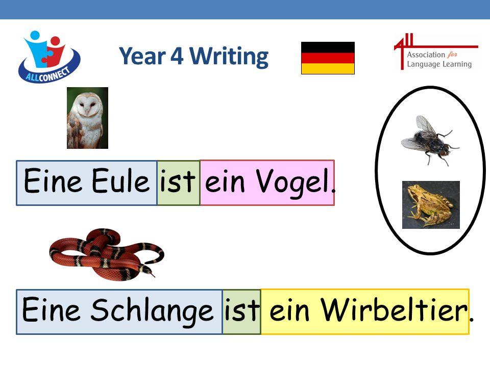 Year 4 Writing Eine Eule ist ein Vogel. Eine Schlange ist ein Wirbeltier.