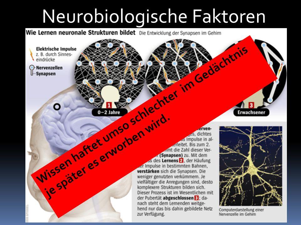 Neurobiologische Faktoren Wissen haftet umso schlechter im Gedächtnis je später es erworben wird.