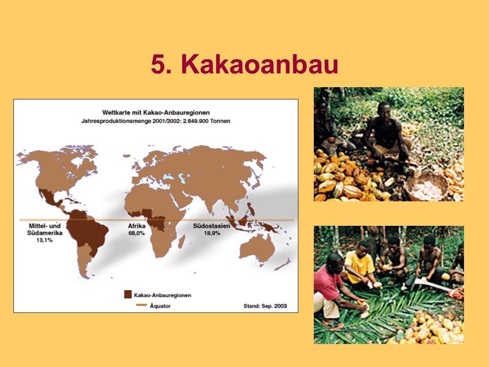 5. Kakaoanbau
