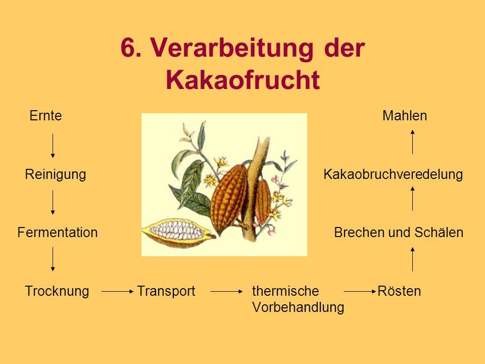 6. Verarbeitung der Kakaofrucht Ernte Mahlen Reinigung Kakaobruchveredelung Fermentation Brechen und Schälen Trocknung Transport thermische Rösten Vor