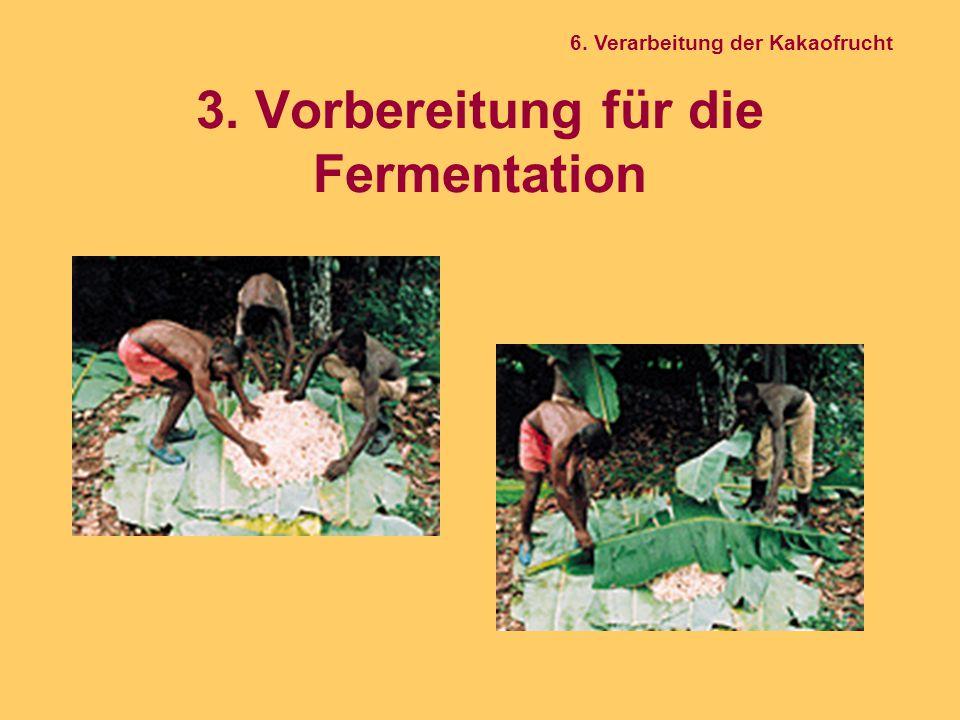 3. Vorbereitung für die Fermentation 6. Verarbeitung der Kakaofrucht