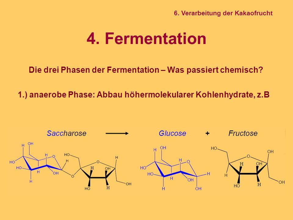 4. Fermentation Die drei Phasen der Fermentation – Was passiert chemisch? 1.) anaerobe Phase: Abbau höhermolekularer Kohlenhydrate, z.B 6. Verarbeitun