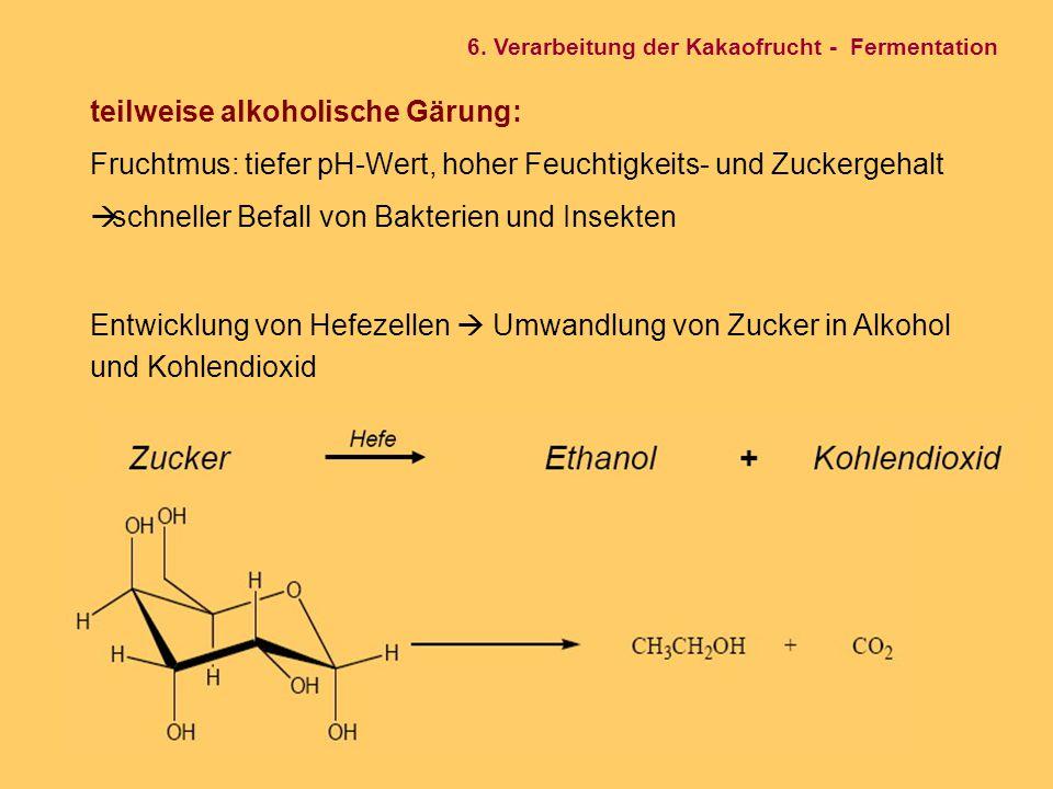 teilweise alkoholische Gärung: Fruchtmus: tiefer pH-Wert, hoher Feuchtigkeits- und Zuckergehalt  schneller Befall von Bakterien und Insekten Entwickl